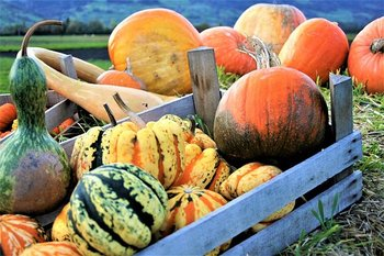 ornamental-pumpkins-2889601__340.jpg
