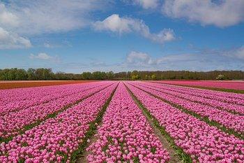 pink-2254972__340.jpg