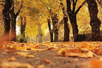 trees-1789120__340.jpg